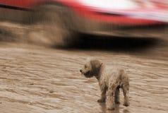 Ensam våt valp på den stormiga regniga gatan Royaltyfria Foton