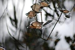 Ensam vattenliten droppe på ett blad som glider över tyst vattenyttersida royaltyfria bilder