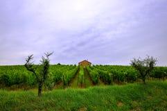 ensam vingård för hus Fotografering för Bildbyråer