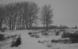 Ensam vinter Royaltyfri Bild