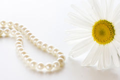 Ensam vit tusensköna Fotografering för Bildbyråer
