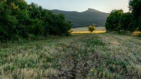 ensam yellow för blomma Arkivbilder