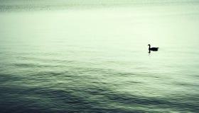 ensamhet Arkivfoton