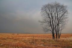 ensamhet Fotografering för Bildbyråer