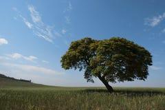Ensamhet för himmel för landskap för trädhorisont ensam Arkivbilder