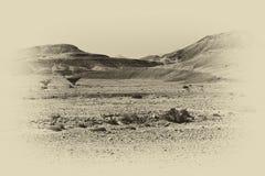 Ensamhet och tomhet av öknen royaltyfri bild