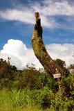 Ensamhetträd Arkivfoto