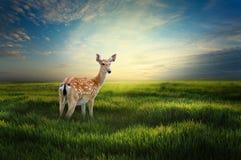 ensamma hjortar Royaltyfria Foton