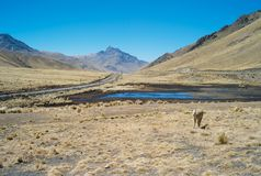 Ensamma järnvägspår i de Anderna bergen av Peru royaltyfri bild