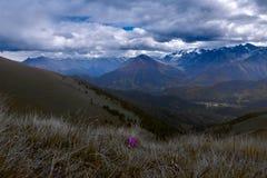 Ensamma lilor blommar med en bakgrund av berg och åskamoln arkivbild