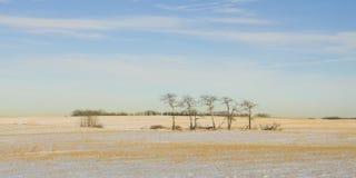 ensamma majestätiska panoramatrees Arkivfoto
