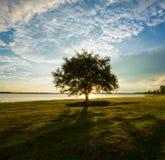 Ensamma träd Royaltyfria Bilder