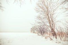 Ensamma träd i snön Arkivbild