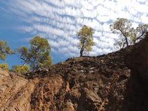 Ensamma träd på en kant av en klippa Arkivbilder