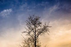 Ensamma trädfilialer Fotografering för Bildbyråer