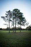 ensamma tre trees Royaltyfri Foto