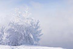 ensamma trees Arkivbild