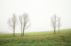 Ensamma trees Royaltyfri Bild