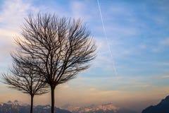 Ensamma trees Royaltyfri Foto