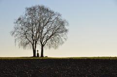 ensamma trees för kors Royaltyfri Fotografi