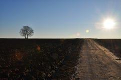 ensamma trees för kors Royaltyfria Bilder