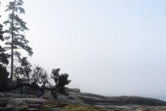Ensamma Trees och dimma - Acadianationalpark Royaltyfria Bilder