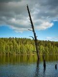 Ensamt översvämmat träd royaltyfri foto