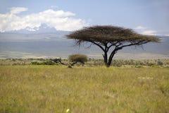 Ensamt akaciaträd med Mount Kenya i bakgrund från Lewa naturvård, Kenya Afrika Arkivfoto