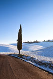Ensamt cypressträd och insnöad vinter lantlig liggande Tuscany, royaltyfri bild