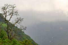 Ensamt dött träd i grön tropisk skog under regnigt väder i den Matheran maharashtraen Arkivfoto