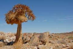 Ensamt darrningträd med fågelredet i stenig landskap- och blåttafrikanhimmel royaltyfri foto
