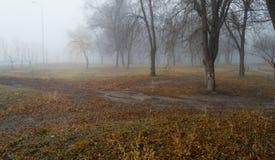 Ensamt en sörja i en sätta in och ett gult gräs Fotografering för Bildbyråer