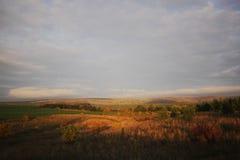Ensamt en sörja i en sätta in och ett gult gräs Arkivfoto