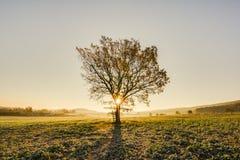 Ensamt en sörja i en sätta in och ett gult gräs Royaltyfria Bilder