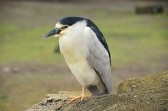 Ensamt fågelanseende på ett ben på en vagga arkivbild