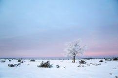Ensamt frostigt träd i ett stort vanligt område Arkivfoto