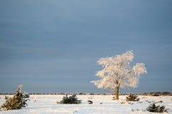 Ensamt frostigt träd i ett vanligt landskap Royaltyfria Foton