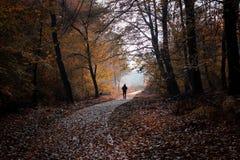 ensamt gå Fotografering för Bildbyråer