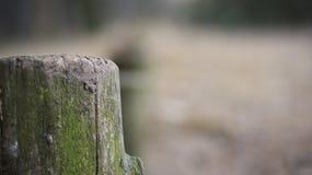 ensamt gammalt stycke av trä Royaltyfri Bild