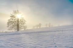Ensamt gammalt träd i den djupfrysta vintern arkivbilder