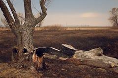 Ensamt gammalt träd i höstsolnedgångcloseupen royaltyfri fotografi