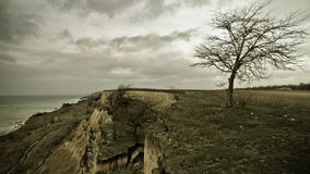 Ensamt gammalt träd på havskusten Royaltyfri Bild