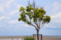 Ensamt grönt träd Royaltyfri Bild
