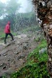 Ensamt i den Kanchenjunga nationalparken i en Rainey dag Royaltyfria Bilder