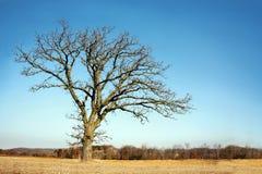 Ensamt kalt förgrena sig vinterträd i landet arkivbild