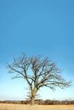 Ensamt kalt förgrena sig vinterträd i landet royaltyfri bild