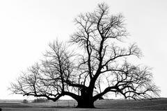 Ensamt kalt träd i ett fält i nedgång royaltyfri bild