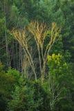 Ensamt kalt träd i inställningssolljus arkivfoton