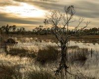 Ensamt kargt översvämmat fält arkivbild