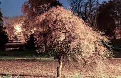 Ensamt litet träd i Zurich Belvoirpark arkivbild